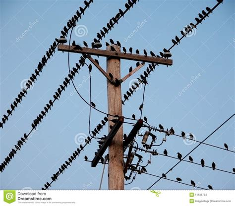 black wires electrical black birds on electrical wires stock images image 11136784