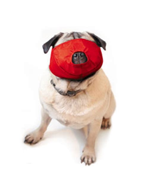 muzzles for pugs sound vet on line