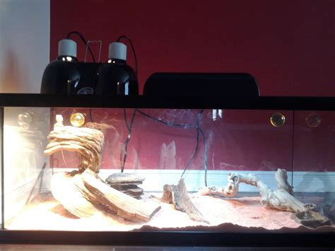 bearded dragon heat l bearded dragon heat ls lighting and ceiling fans