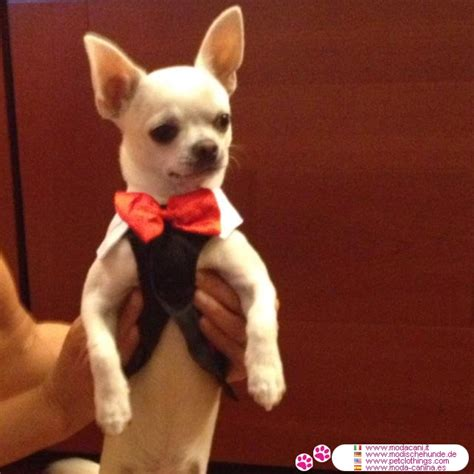 puppy tuxedo tuxedo dinner jacket shipping to usa and canada