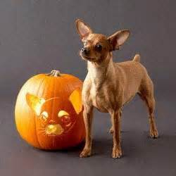 how much pumpkin for dogs south bay pets