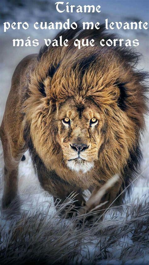 imagenes de leones guerreros 17 mejores ideas sobre frases de el rey le 243 n en pinterest