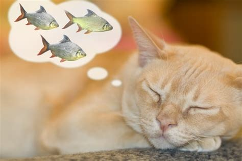 cat love fish
