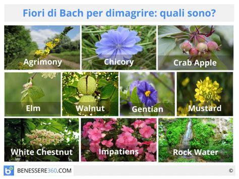 come agiscono i fiori di bach fiori di bach per dimagrire quali sono funzionano contro