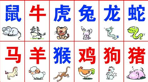 new year zodiac animal order zodiac yunnan adventure travel