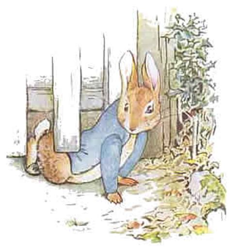 serie beatrix potter cuentos 8448819101 beatrix potter illustrator and author of peter rabbit