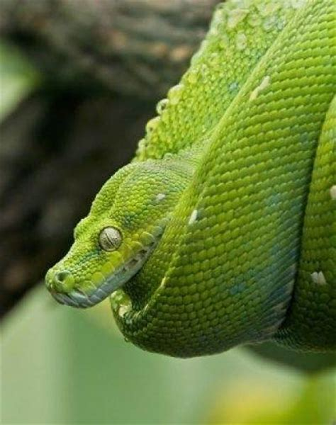 Garden Snake Poison Are Green Snakes Poisonous Updated
