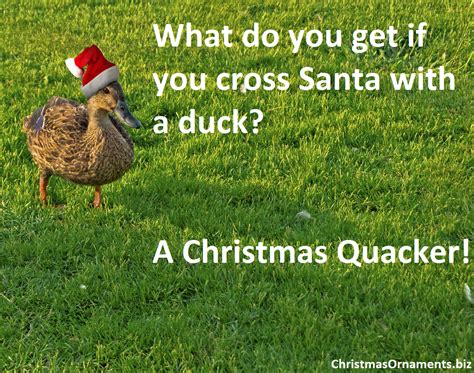 what do you get if you eat christmas decorations joke meme duck plus santa what do you get if you cross santa with a duck a