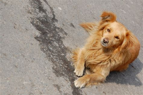 free puppies in illinois lost dogs illinois more than a posting service lost dogs illinois