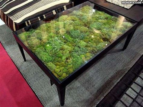 coffee table terrarium neat