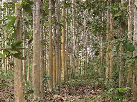 community logging sebuah idiologi dalam pengelolaan hutan community logging