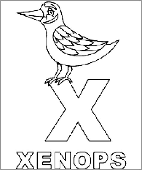 how to your coloring xenops coloring page animals town animals color sheet