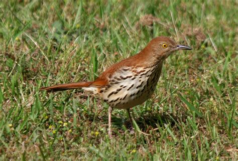 avise s birds of the world