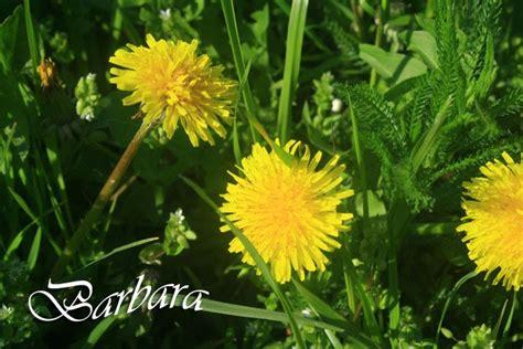 sciroppo di fiori di tarassaco un vegano appetito sciroppo ai fiori di tarassaco