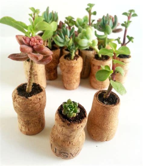 succulent cork planters a charming project