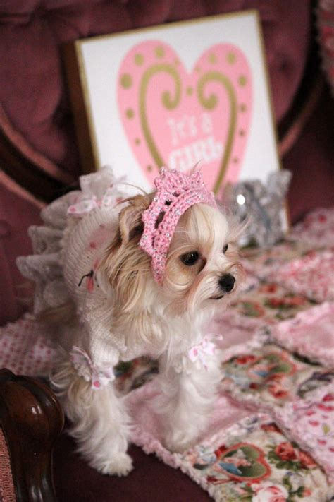 tiara puppy crochet tiara pet tiara crochet crown princess