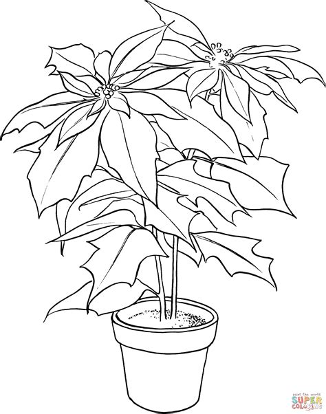 coloring page christmas flower poinsettia or christmas flower coloring online super