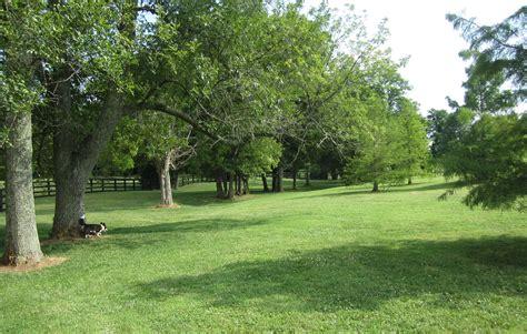 puppy park jacobson park