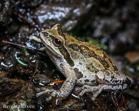 how to find frogs in your backyard pin by jenkins on clean home diy cleaning