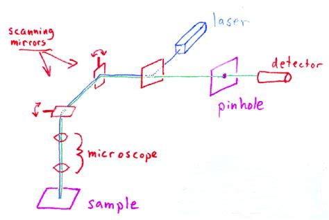 how does a light microscope work how does a confocal microscope work