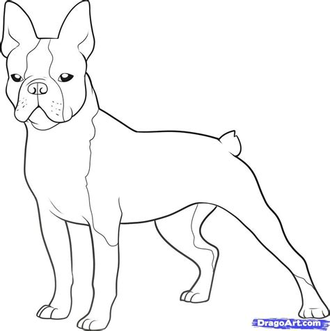 scottish terrier dog breed coloring pages coloring pages