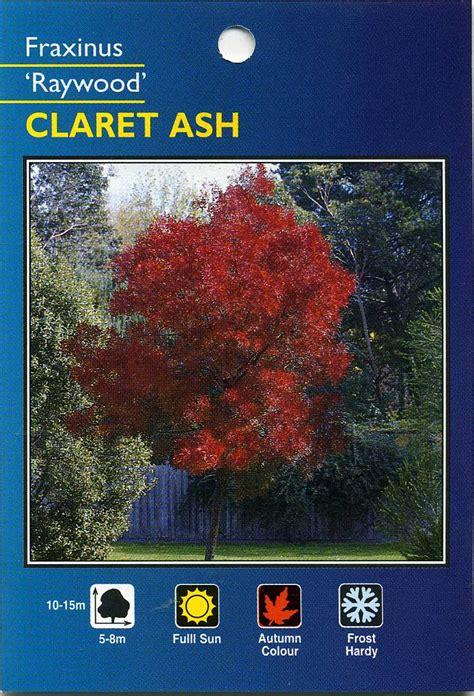 claret ash fraxinus raywood
