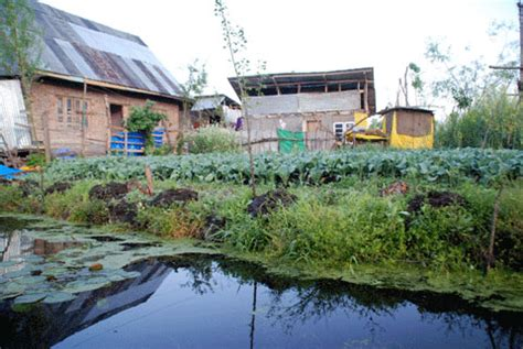 floating vegetable garden india ink water land