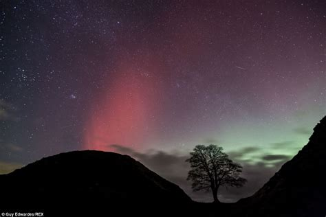 sycamore gap a dci mystery the dci mysteries volume 2 northern lights borealis gloucestershire