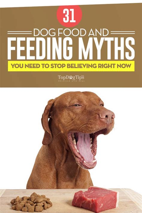 when to stop feeding puppy food 32 food and feeding myths debunked by science infographic