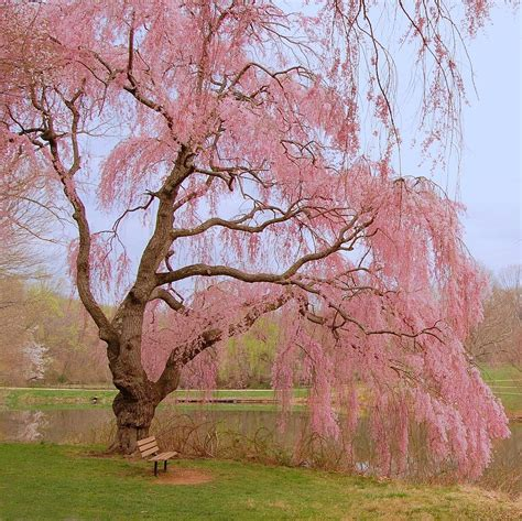 Tree Duvet Cover Weeping Spring Holmdel Park Photograph By Angie Tirado