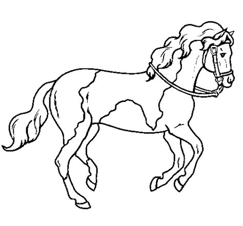 coloring pages of paint horses 5 coloring page