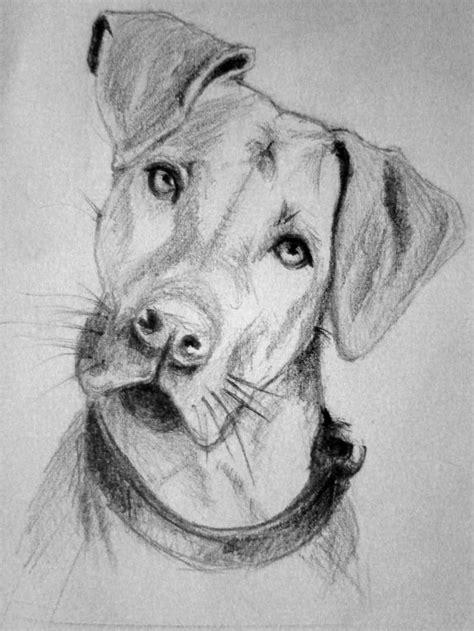 image result  dog sketch images   sketches dog