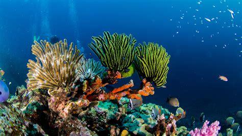 dive cozumel underwater treasures ssi diver dive trips