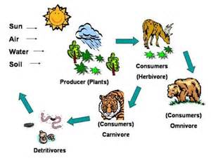 Is also effected by the food chain because the chain itself shows how