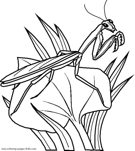 Grasshopper Printable Coloring Pages Grasshopper Coloring Page