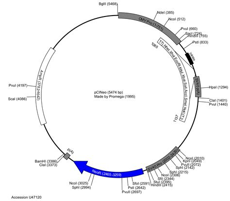 vector map generator plasmid map adriftskateshop