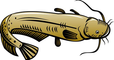 What Does Catfish Use To Find Catfish Clipart Best