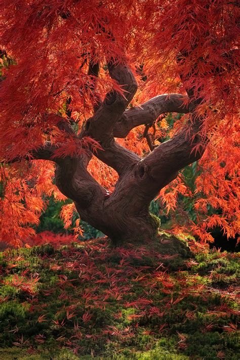 beautiful tree beautiful tree pictures great inspire