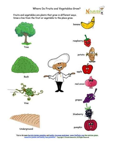 fruits  vegetables grow matching worksheet