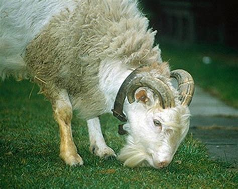fotos animales hibridos reales 18 extravagantes animales h 237 bridos reales hechos x el