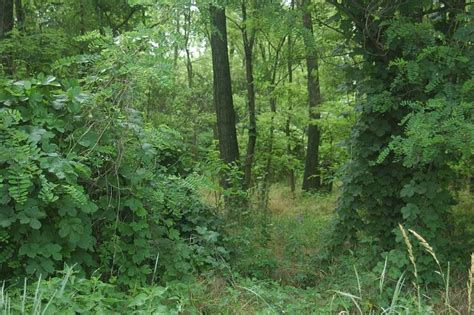 woodland forest plants and trees temperate forest thinglink