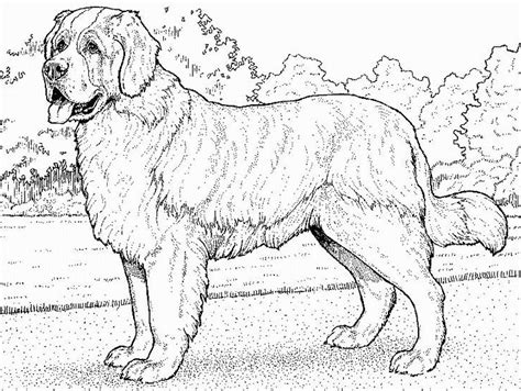 Dog Pictures In Black And White Cute Funny Dogs St Bernard Coloring Pages