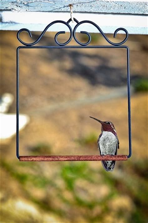 the bird perched on the swing wild birds unlimited do i really need a hummingbird swing