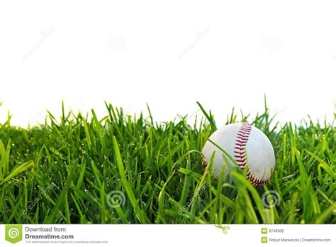 baseball in dewy grass royalty free stock image image