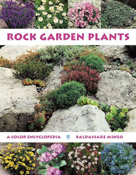 plants for a rock garden rock garden plants a color encyclopedia from timber press