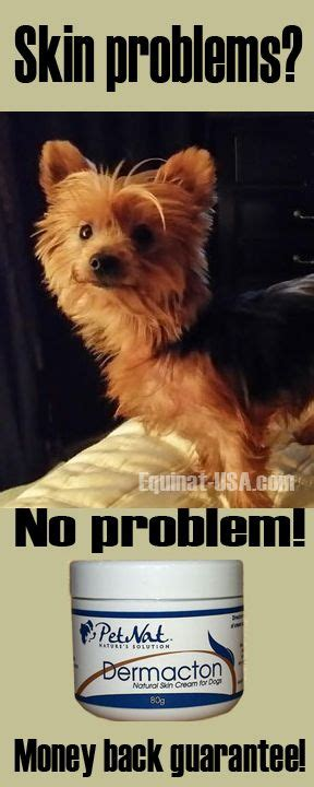best food for itchy yorkie 292 best images about itchy dogs with sore skin hair loss get relief with