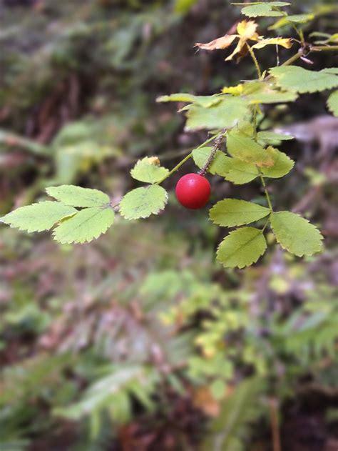 little berry a lone little berry by kath660 on deviantart