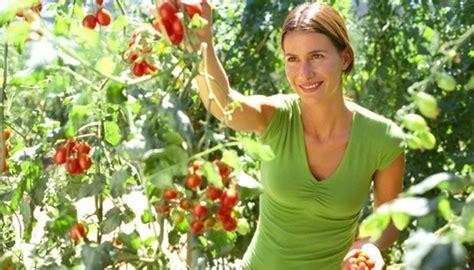 Wie Pflege Ich Tomatenpflanzen 5105 by Tomaten Pflanzen Einfache Tipps F 252 R Eine Reiche Ernte