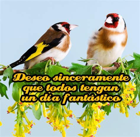 imagenes de buenas noches feliz martes banco de im 193 genes postales de feliz martes buenas tardes