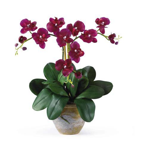 20 inch mini silk phalaenopsis orchid arrangement